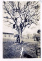 Marietta Johnson supervises students in a tree on the campus of Marietta Johnson School of Organic...