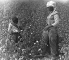 Child and young woman picking cotton in the field of Mrs. Minnie B. Guice near Mount Meigs in...