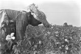 Woman picking cotton in the field of Mrs. Minnie B. Guice near Mount Meigs in Montgomery County,...