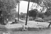 Two boys and dogs in the yard beside a dirt road in Newtown, a neighborhood in Montgomery, Alabama.