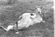 Two dogs lying in the grass of a yard in Newtown, a neighborhood in Montgomery, Alabama.