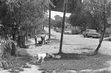 Two boys and several dogs in the yard beside a dirt road in Newtown, a neighborhood in Montgomery,...