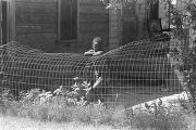Little boy leaning on a wire fence around a clapboard house in Newtown, a neighborhood in...