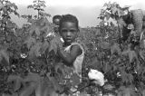 Children picking cotton in the field of Mrs. Minnie B. Guice near Mount Meigs in Montgomery...