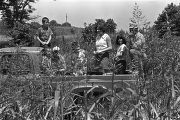 Group of white people, including several children, in the back of a pickup truck, observing the...