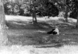 Man lying in the grass in a park in Harlem.