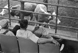 Two men seated in the audience at a livestock auction at Capital Stock Yards in Montgomery,...