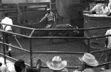 Cow in the arena during a livestock auction at Capital Stock Yards in Montgomery, Alabama.