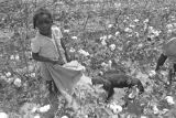 Little girl with a dog in the cotton field of Mrs. Minnie B. Guice near Mount Meigs in Montgomery...