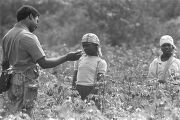 Norman Lumpkin, news director for WRMA radio, talking to a young girl in the cotton field of Mrs....