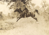 Woman on horseback, jumping over a log.
