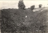 Gully stabilized with kudzu planted in 1934, three and a half miles northwest of Dadeville,...