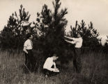 Students studying forestry at Alabama Polytechnic Institute in Auburn, Alabama.