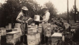 Beekeepers with beehives.