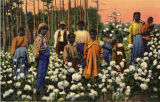 Lithograph postcard of African Americans standing in a cotton field.