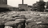 Cotton at the compress at Dean & Moore Cotton Warehouse in Eufaula, Alabama.