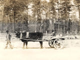 African Americans going to a water mill in an ox-drawn cart in Monroe County.