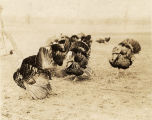 Turkey gobblers on the Walmutta Stock Farm in Dallas County, Alabama.