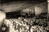 Chicken farm in Eufaula, Alabama.