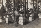 Beekeeper holding up a frame of honeycomb from a wooden beehive in a forest in Alabama.