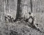 Two men chopping down a tree in a forest in Alabama.