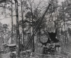 Man operating a crane to put freshly cut logs on a trailer parked in a forest in Alabama.