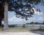 Price C. McLemore looking out over a field on his Oaks Plantation in Montgomery County, Alabama.