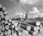 Pile of logs at the Tutt Lumber Company.