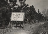 Pine forest planted by the T. R. Miller Company of Brewton, Alabama.