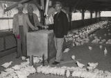 Woman and two men standing beside a feed bin in a chicken house in Alabama.
