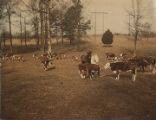 Cattle on the Datcher family farm in Harpersville, Alabama.