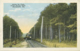 """Among the Pines, Picket Springs Road, Montgomery, Ala."""