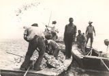 Oyster planting in Mobile County, Alabama.