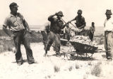 Men loading wheelbarrows with oyster shells in Mobile County, Alabama.