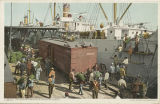 """Unloading Bananas from Steamer."""
