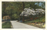 """Spring-time in the mountains, apple and dogwood trees in bloom."""