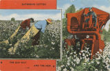 """Gathering Cotton the Old Way and the New."""