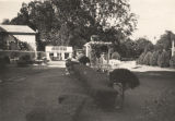 "Boxwoods and an outdoor living room in ""Helen's Garden,"" at the home of Mrs. Claud..."
