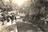 Garden of Mrs. T.S. Moore on Randolph Street in Eufaula, Alabama, where the first zinnia show was...