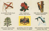 Postcard featuring Alabama's state emblems:  flag (adopted 1923), flower (camellia), bird...