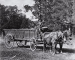 Early Thomas Peace with a wagon full of oak wood, which he used to make charcoal.