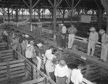 Men inspecting hogs at the W. H. Hodges and Company stockyards at 1451 Parallel Street in...