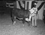 Award-winning bull at the Negro Fat Stock Show and Sale at Union Stock Yards, located at Furnace...