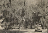 Trees covered with Spanish moss along Riverside Drive in Eufaula, Alabama.