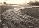 Field of oats located two-and-a-half miles east of Camp Hill on the Lafayette Highway in...