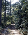 Path in the woods at Robinson Springs in Elmore County, Alabama.