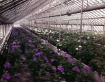 Interior of Rosemont Greenhouses, Inc., at 2430 Carter Hill Road in Montgomery, Alabama.