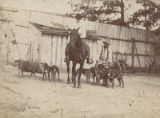 """Warden Jackson and his man-hunters ready for the chase - Sprague Junction, Alabama."""