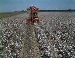 Man operating a mechanical cotton picker, probably in Montgomery County, Alabama.
