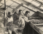 German prisoners of war working in the greenhouse at the POW camp in Aliceville, Alabama.